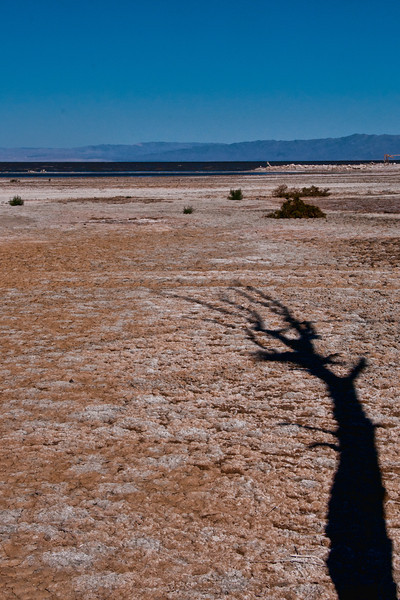 Salton Sea tree shadow _3510.jpg