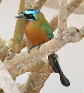 Birds of Trinidad + Tobago