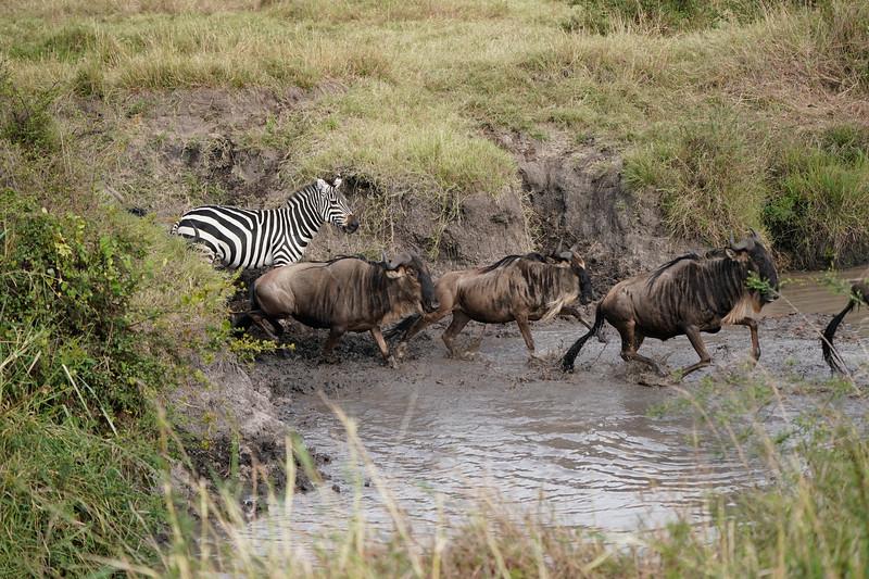 safari-2018-90.jpg