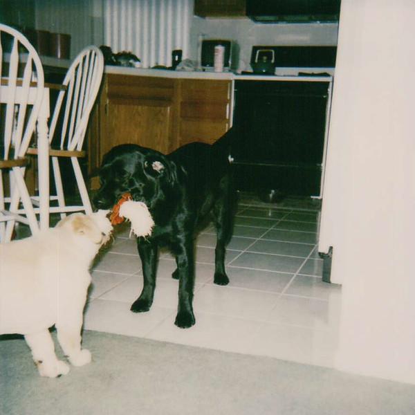 June 1996 - Dog play...