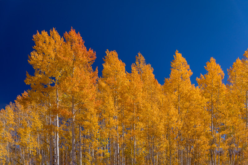Fall color out of Coalmont, Colorado