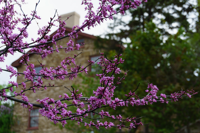 Flowering Tree and Montgomery Inn