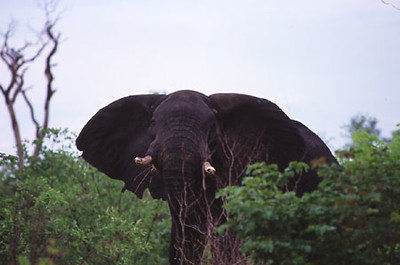 africa0095.jpg