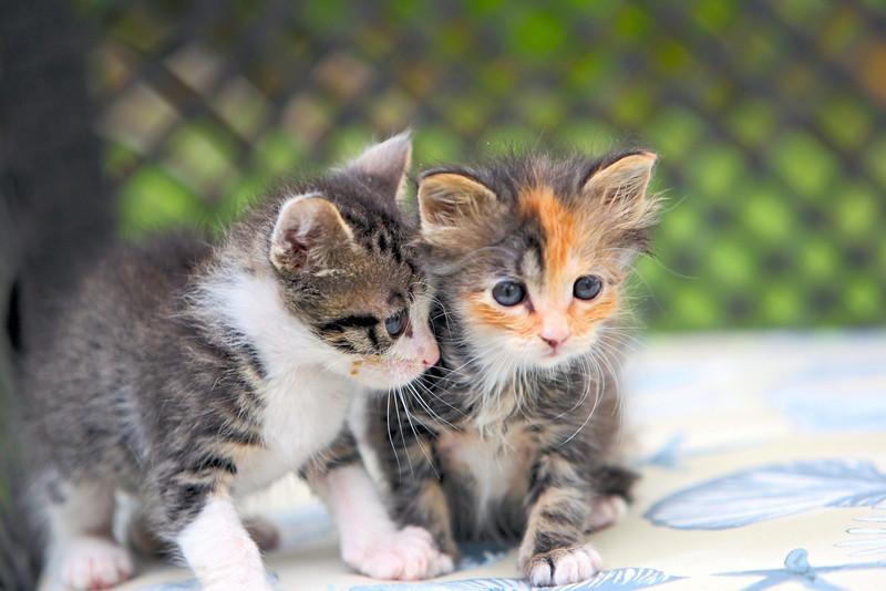 kittens_015-1.jpg