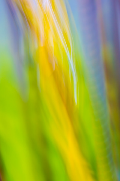 Abstract swirls of yellow against a backdrop of green and purple