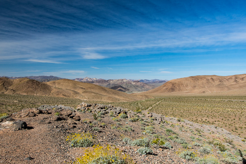 Southend-Death-Valley-April-spring-2017flowersjpg.jpg