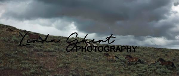 Challis Mountain Wild Horses