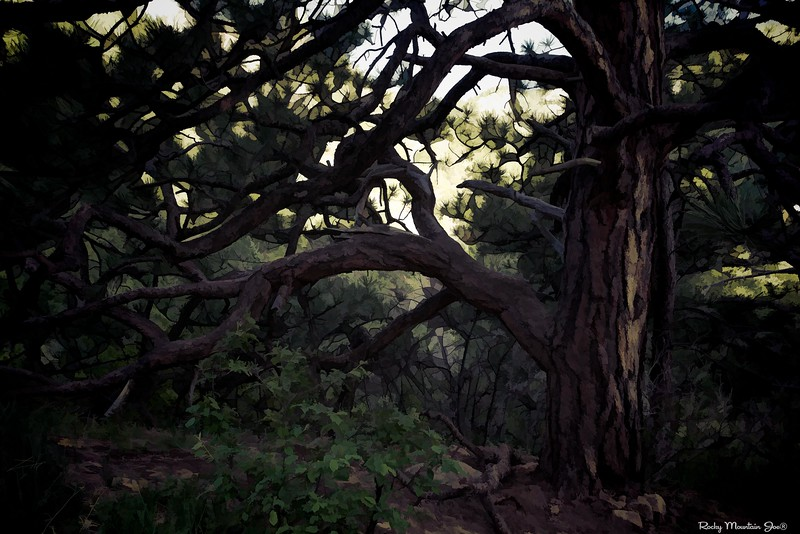 The Tree  2014-05-03_RMJIMG_8752s.jpg