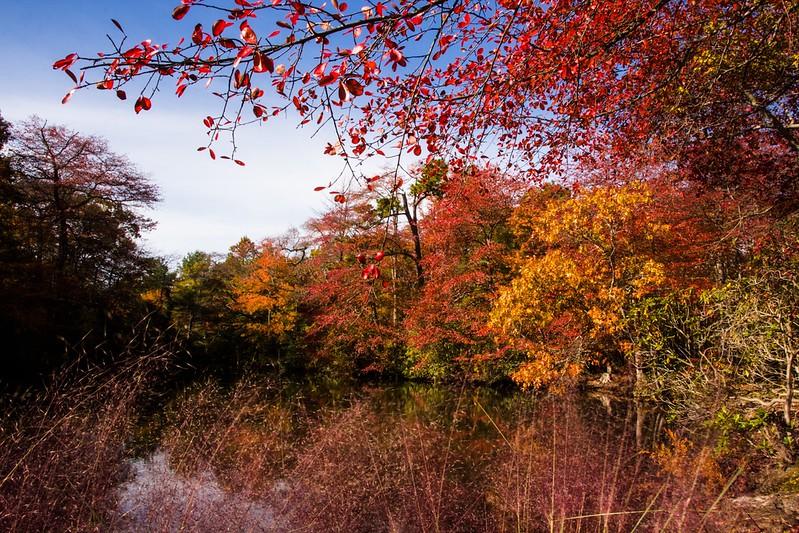 Bayard Cutting Arboretum State Park-13.jpg