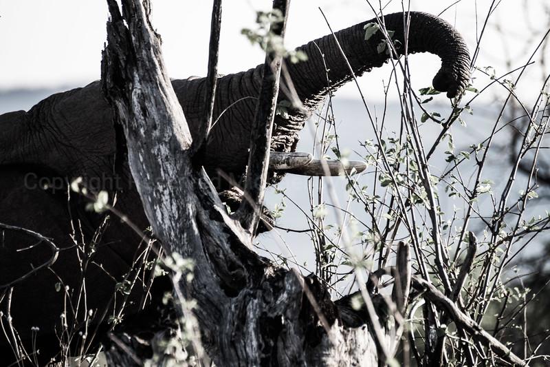 Madikwe-47.jpg