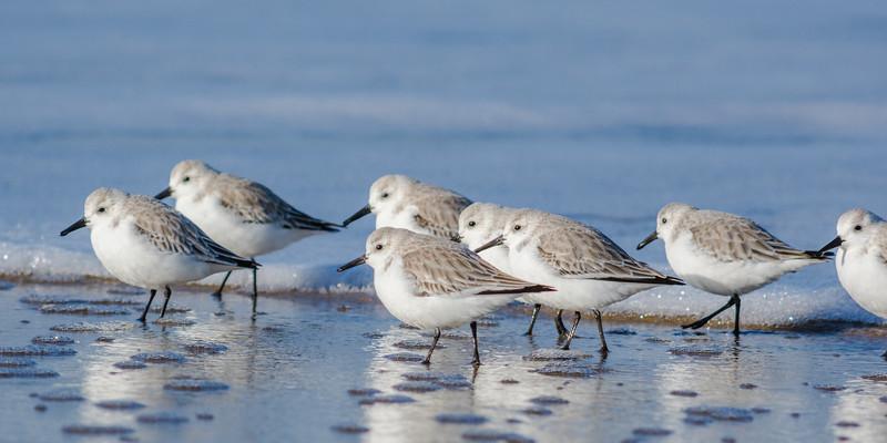 Birds 781 pano