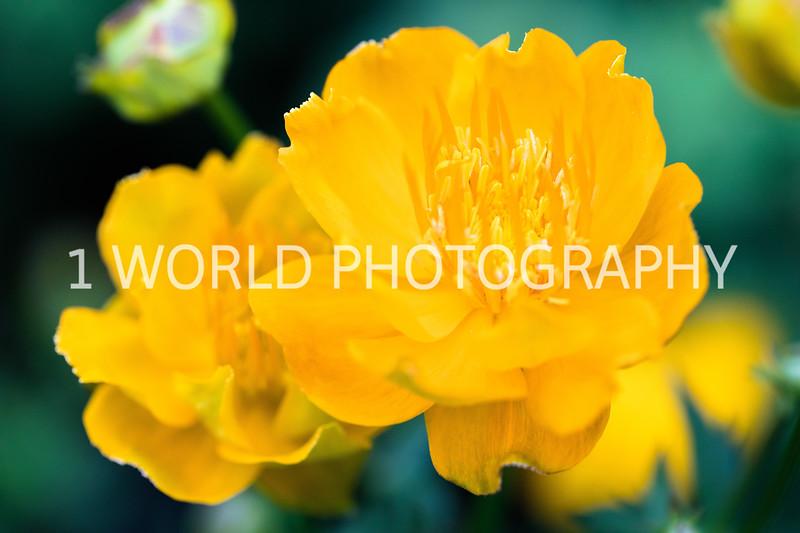 Spring Flowers 2018_Cantigny Flowers_Cantigny-132-17.jpg