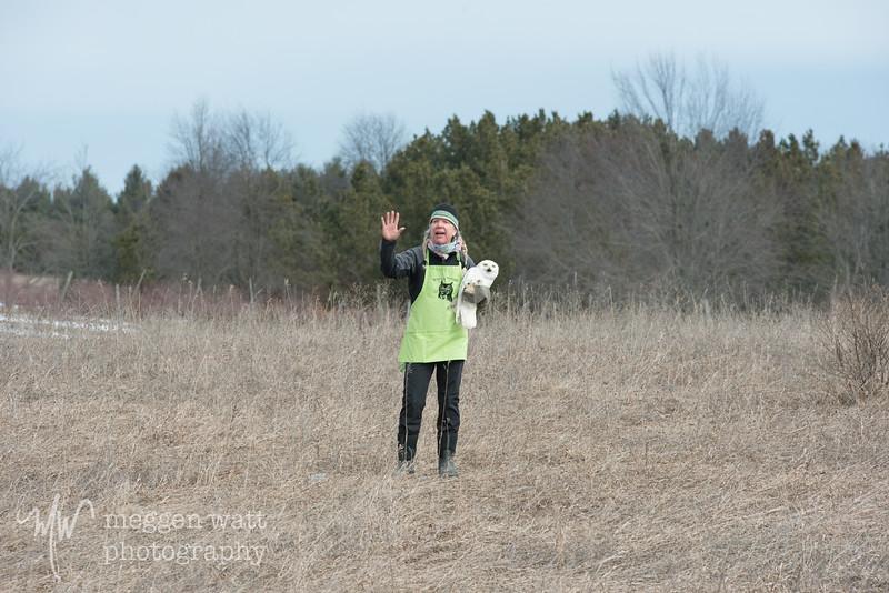 wings of wonder snowy owl release march 4-5638.jpg
