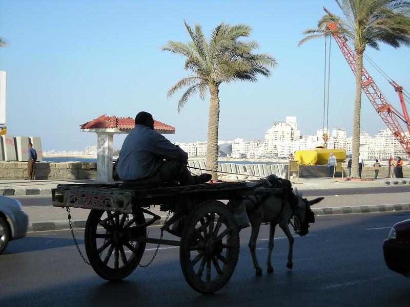 Alexandria on the move - 2008