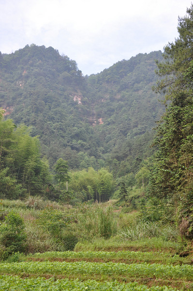 A look up into the mountains from the path reveals this farmer's house -- visible only as a chimney sticking out of the verdure.  See if you can spot it!