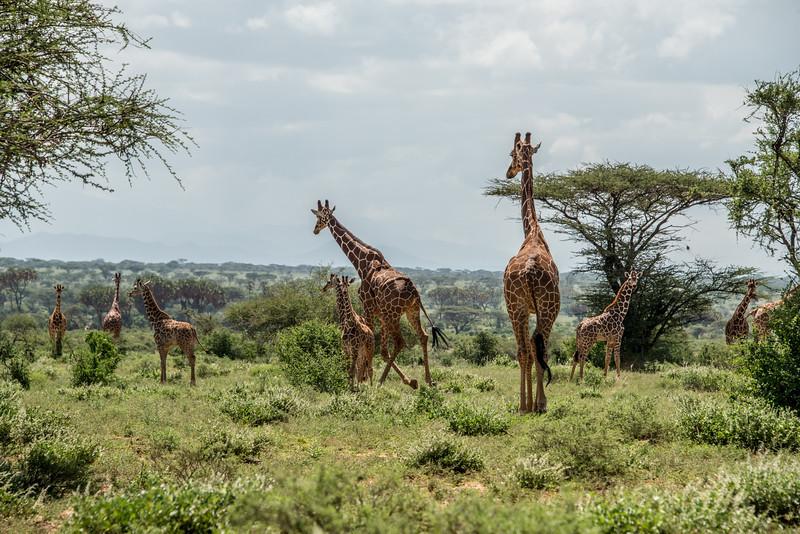 Samburu (70 of 70).jpg