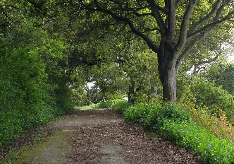 4509 Elkhorn Path.jpg