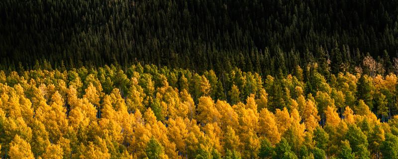 tmophoto_ruedi aspen and pine trees.jpg