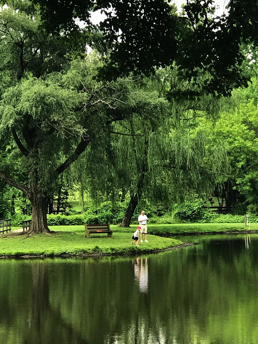 湖边的景,树边的情