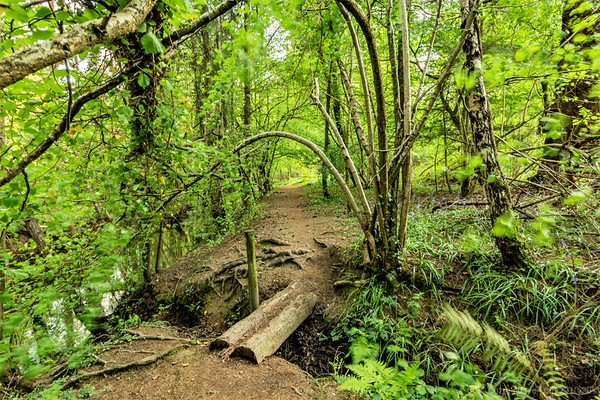 A walk along the Lyd, Forest of Dean