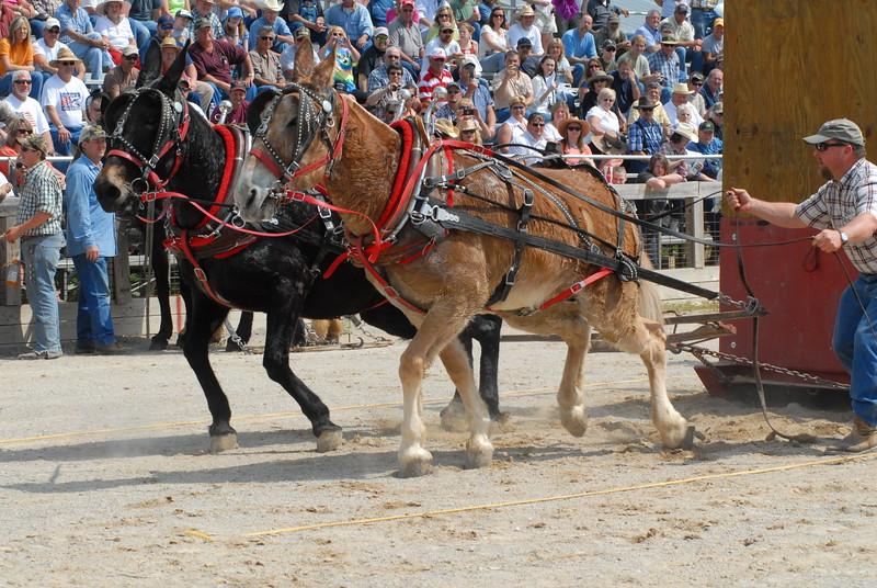 2012 Mule Pulling