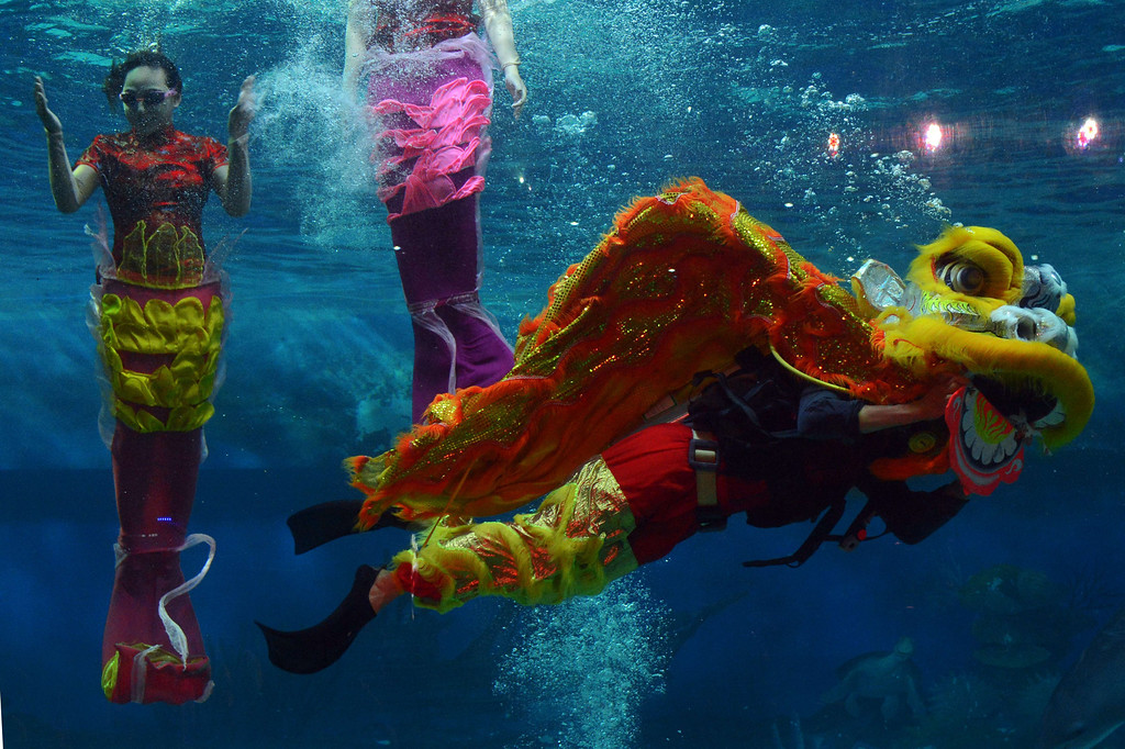 . Indonesian performers dressed as mermaids wearing traditional Chinese cheongsam dress and a lion perform underwater in a special program celebrating the Lunar New Year at Jakarta\'s Ancol park on January 31, 2014.  The Lunar New Year of the Horse falls on January 31. AFP  AFP PHOTO / ROMEO  GACAD/AFP/Getty Images