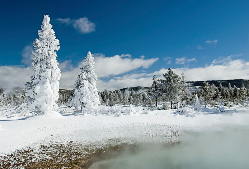 Trees_Frosted-7.jpg