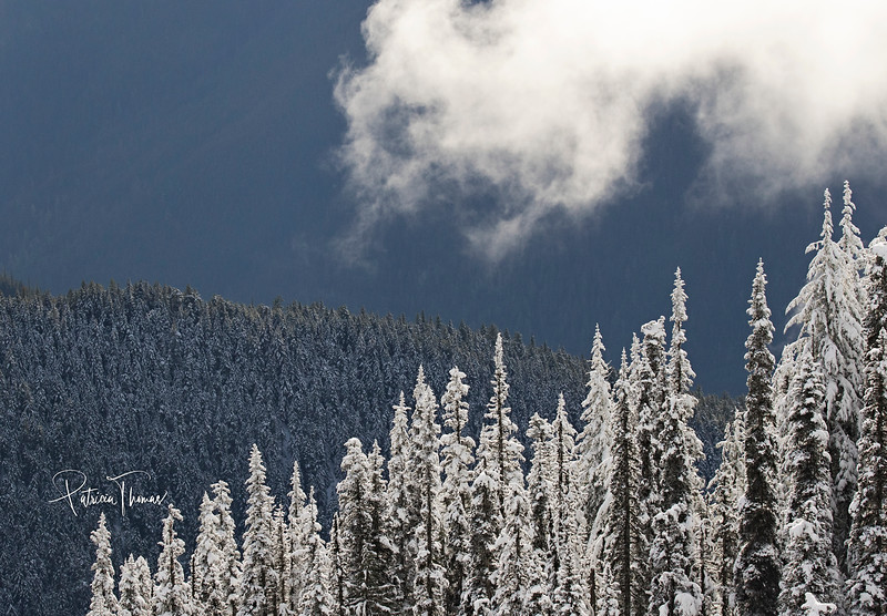 snow trees and hills hills wm.jpg