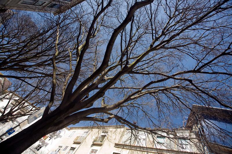 Bare tree, Alfama, Lisbon.