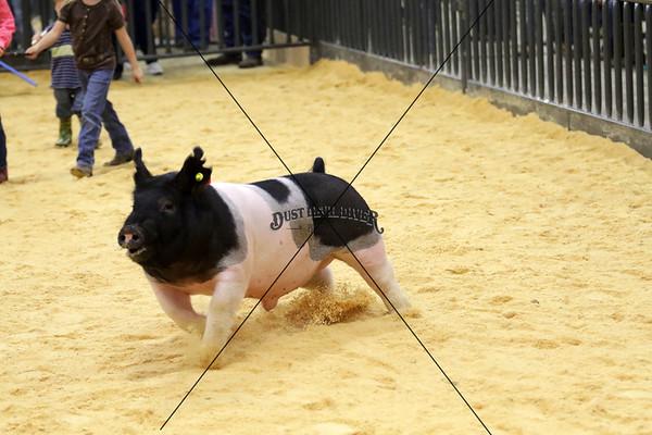 Swine PeeWee