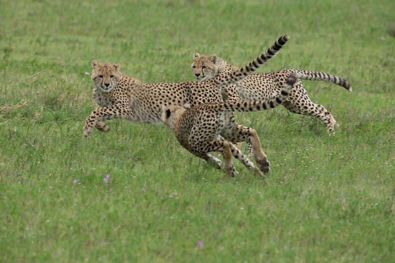 Serengeti_Feb_2013_FH0T7111.jpg
