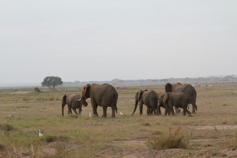 Kenya 2019 #2 653.JPG
