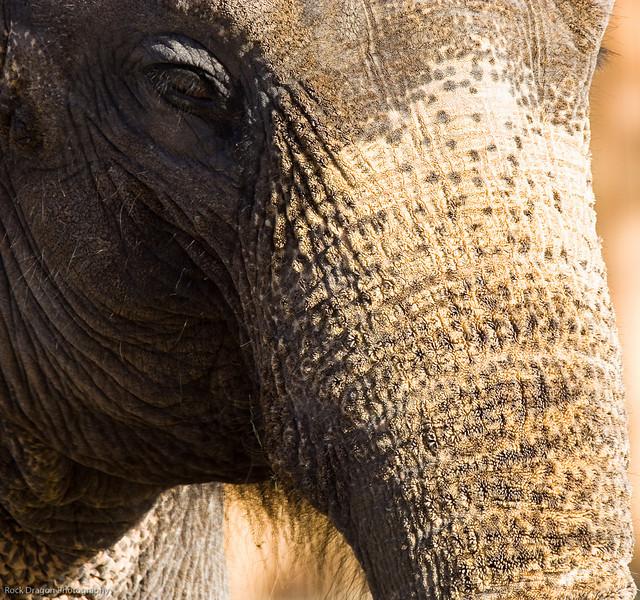 Elephant, Calgary Zoo, Nov. 30