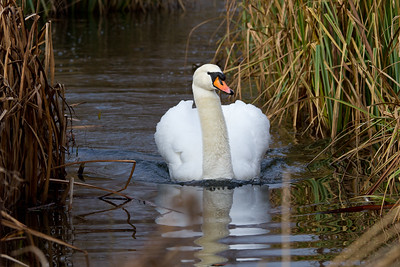 The Wildfowl & Wetlands Trust - London