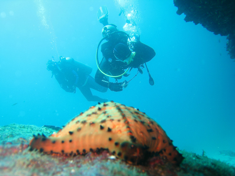 Diving in the Galapagos (363 of 392)