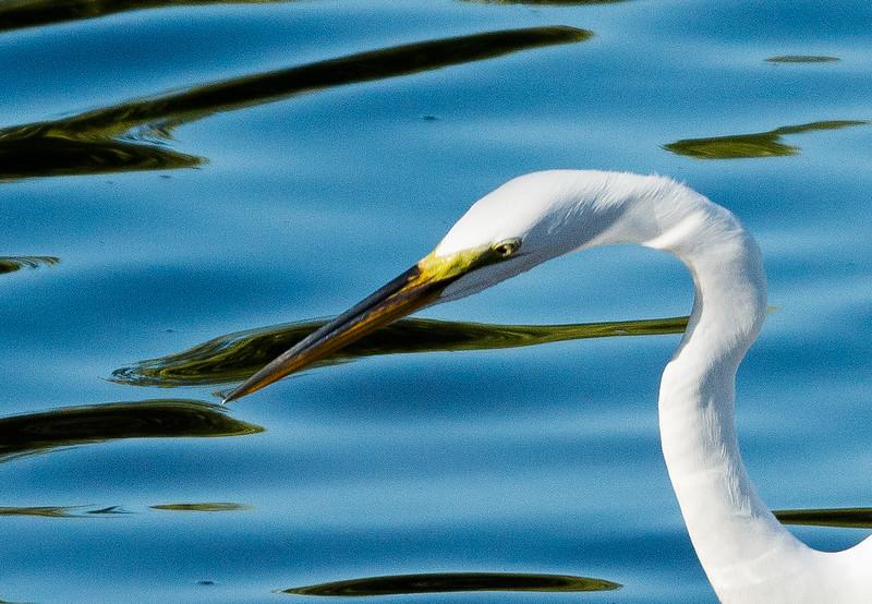 19-Sept North America Birds-8749.JPG
