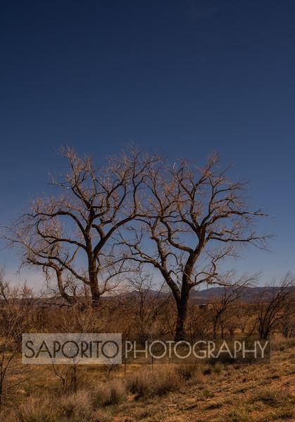 Bare Trees (color)
