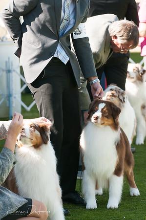 20170205_Australian Shepherds_Lost Dutchman Kennel Club-178.jpg
