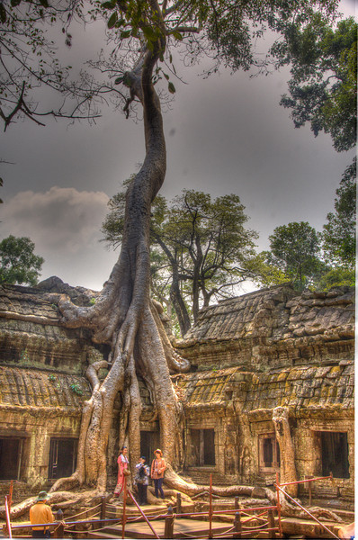 CambodiaTaPhromTreeDSC_4748.jpg