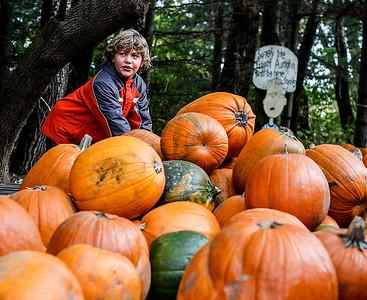 20141020 - Daves Pumpkins (SN)