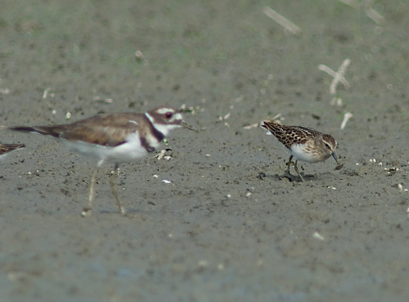 Big Brother and Me