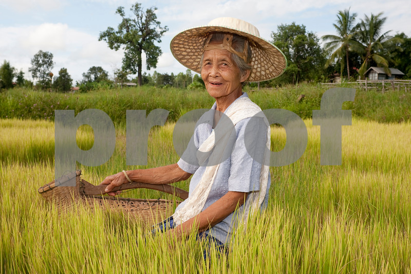 old Asian woman at the paddy-field