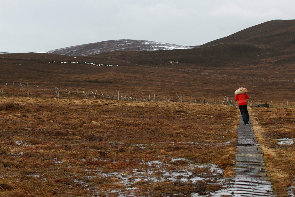 Description of . Reindeer herder Anna Jemmett from the Glenmore Reindeer Centre carries a 12 kg bag of grain feed along a wooden pathway, a task carried out twice a day in winter, before feeding a herd of free ranging reindeer in the Cairngorm Mountains near Aviemore, Scotland December 28, 2012. The 150 strong Cairngorm Reindeer Herd is Britain's only herd of reindeer. REUTERS/David Moir