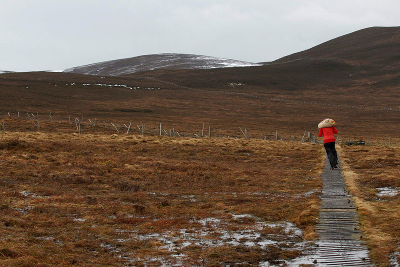. Reindeer herder Anna Jemmett from the Glenmore Reindeer Centre carries a 12 kg bag of grain feed along a wooden pathway, a task carried out twice a day in winter, before feeding a herd of free ranging reindeer in the Cairngorm Mountains near Aviemore, Scotland December 28, 2012. The 150 strong Cairngorm Reindeer Herd is Britain\'s only herd of reindeer. REUTERS/David Moir