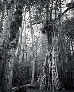 Everglades Corkscrew