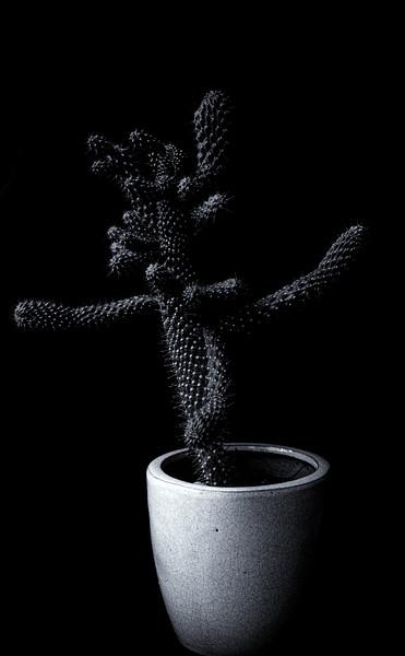 cactus Ilford 400 051420-.jpg