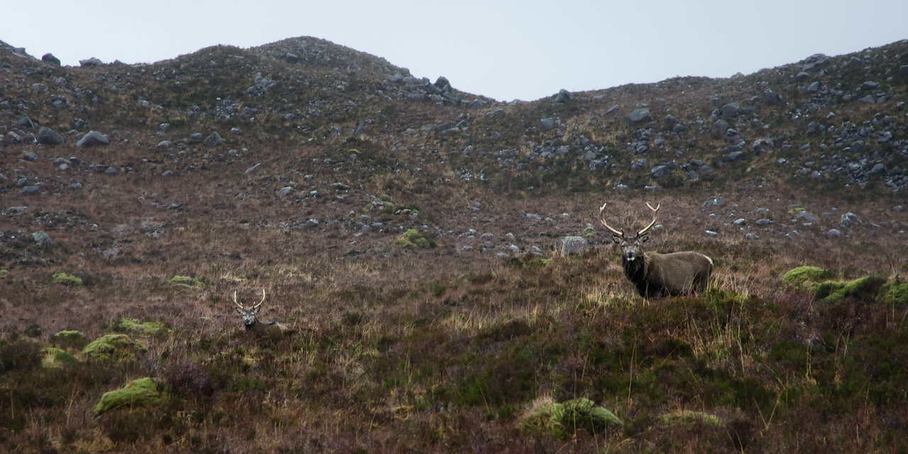 NC500 - Applecross - Stag