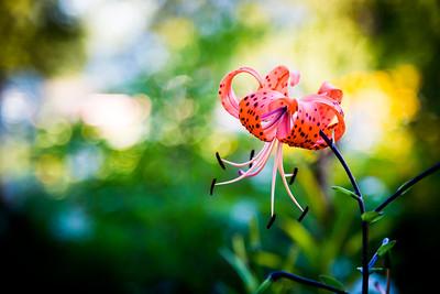 {Plants & Floral}