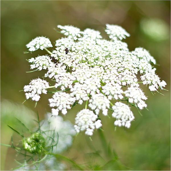 20110724_Flower5.jpg