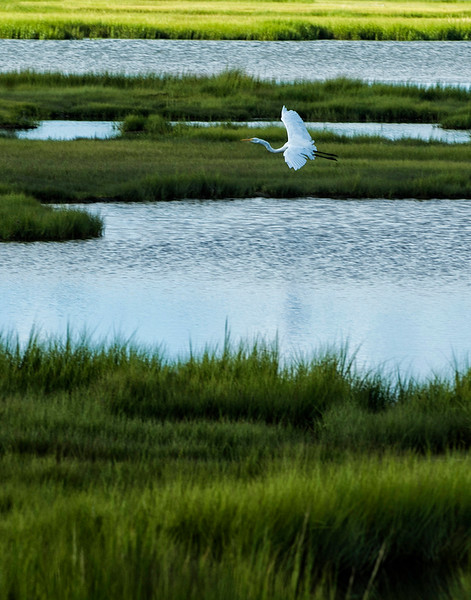 Salt Marshes4.jpg